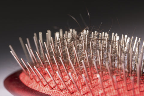 shedding hair in brush bristles