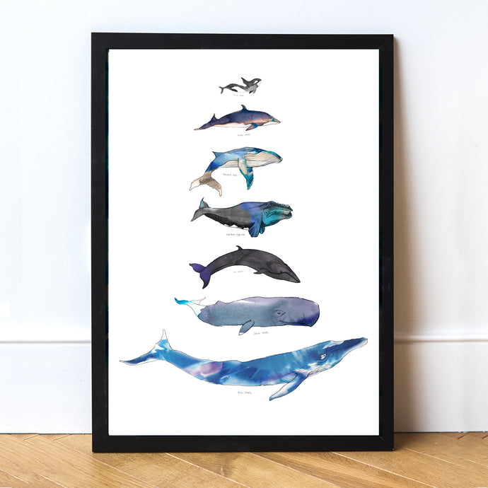Large A2 Whale Art Print