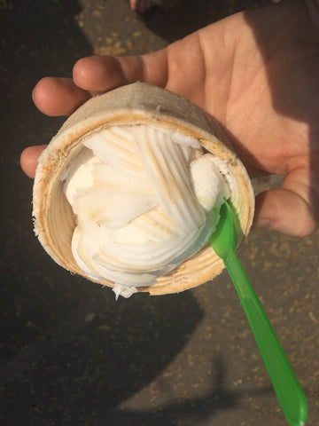 Coconut Icecream in a Real Coconut - Irish Bootstrapper