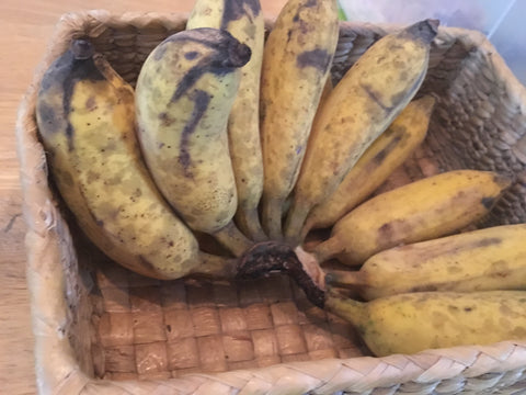 Small Bananas at the Pause Hostel - Irish Bootstrapper