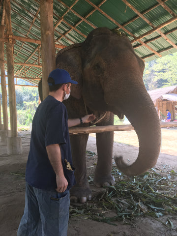 Irish Bootstrapper Feeding Elephant - Chiang Mai