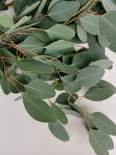 Load image into Gallery viewer, Fresh Cut Stems Eucalyptus Populus