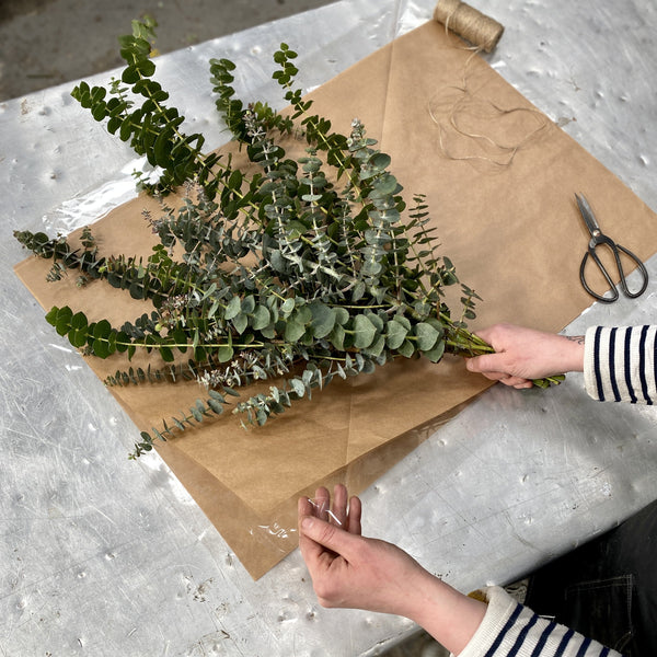 Fresh Eucalyptus Subscription