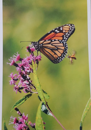 Bee on butterfly on flower print