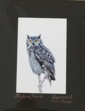 Great horned owl color photo matted in black by Stephanie Turner