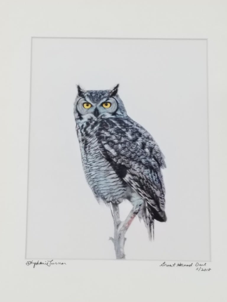 Great Horned Owl #2 matted in white by Stephanie Turner