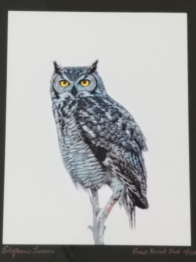 Photo print of owl, matted in black by Stephanie Turner