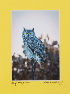 Great Horned Owl color photo with yellow mat by Stephanie Turner