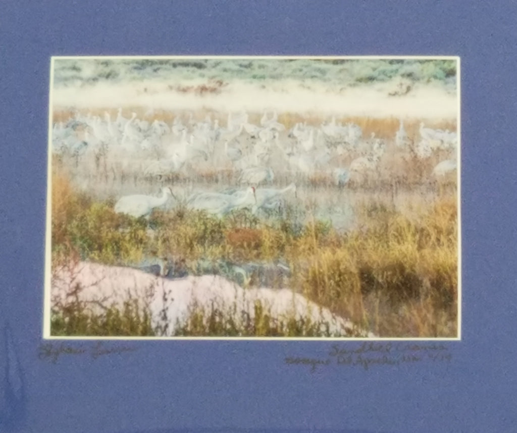 Sandhill cranes color photo with blue mat by Stephanie Turner