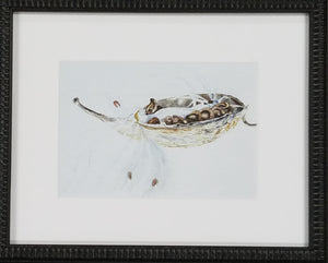 Framed art print of milkweed seed pod