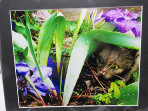 Purple Flowers and Garden Cat