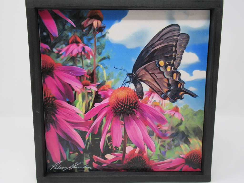 Swallowtail Butterfly with Cone Flowers