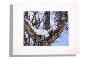 Thorny branches matted photo print