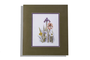 M Bertrand 220/1500 print of irises and daffodils, matted olive, purple