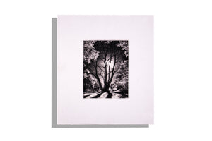 Silhouetted winter tree photo, white mat