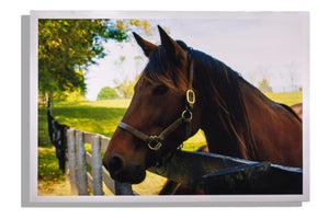 Brown horse looking over fence, color print