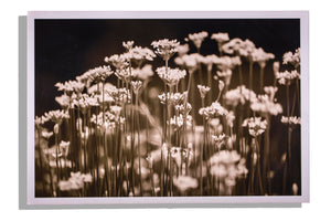 black & white flowers, photograph unframed