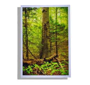 Color photo print, tree stands among young saplings and fallen trees