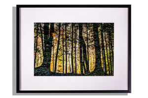 Original photo of trees reflected in water, framed w white mat