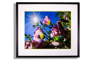 Pink flowers silhouetted in light with starburst sun color framed photo