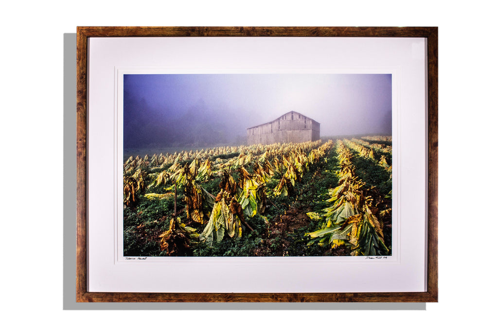 """Tobacco Harvest"" signed photo by Dean Hill 2009, framed"