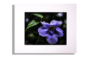 """Purple Rain Drops"" color photo, matted white, signed"