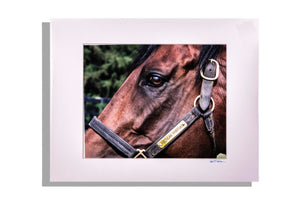 Closeup color photo of American Pharoah horse, matted white, signed