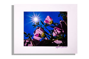 Pink flowers with sun in starburst, color photo matted white, signed