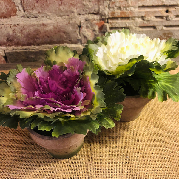 Cabbage Floral