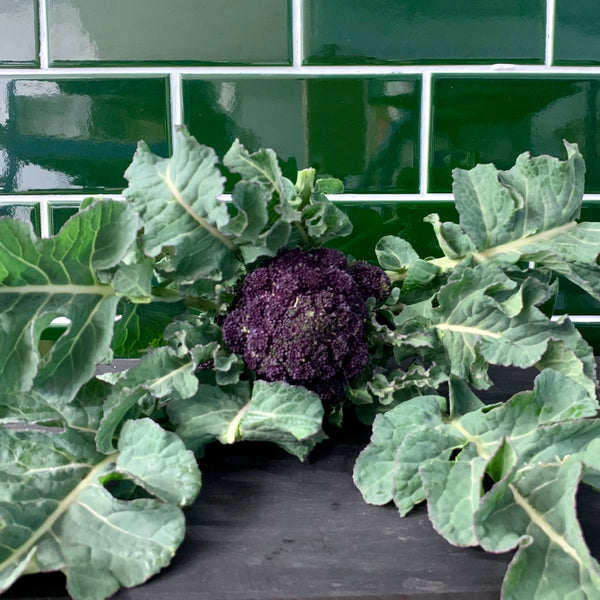 Purple Sprouting Broccoli 250g