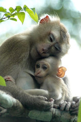 image of a monkey with baby