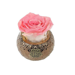 Eternal Roses® Centerpiece Amarylis Mini Soho Steel Eternal Luxury Rose