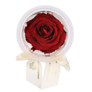 Eternal Roses® Terracotta Mini Eternal Rose Party Favor Set of 6