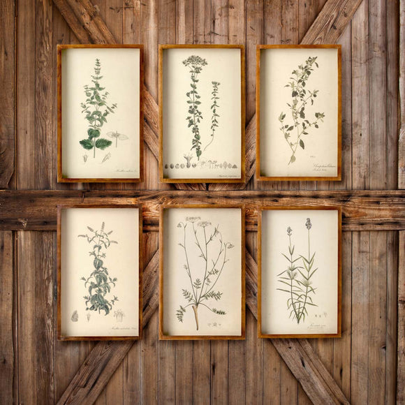 Wood Framed Botanical Prints