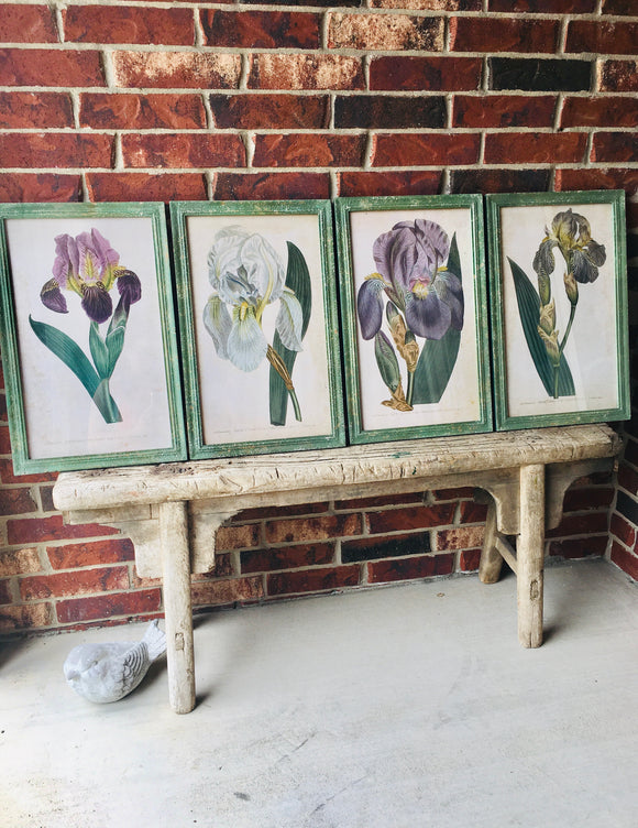 Iris Botanical Prints