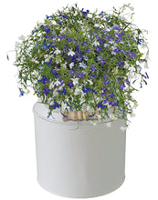 Load image into Gallery viewer, BEES® Lobelia Milk Churn Planter