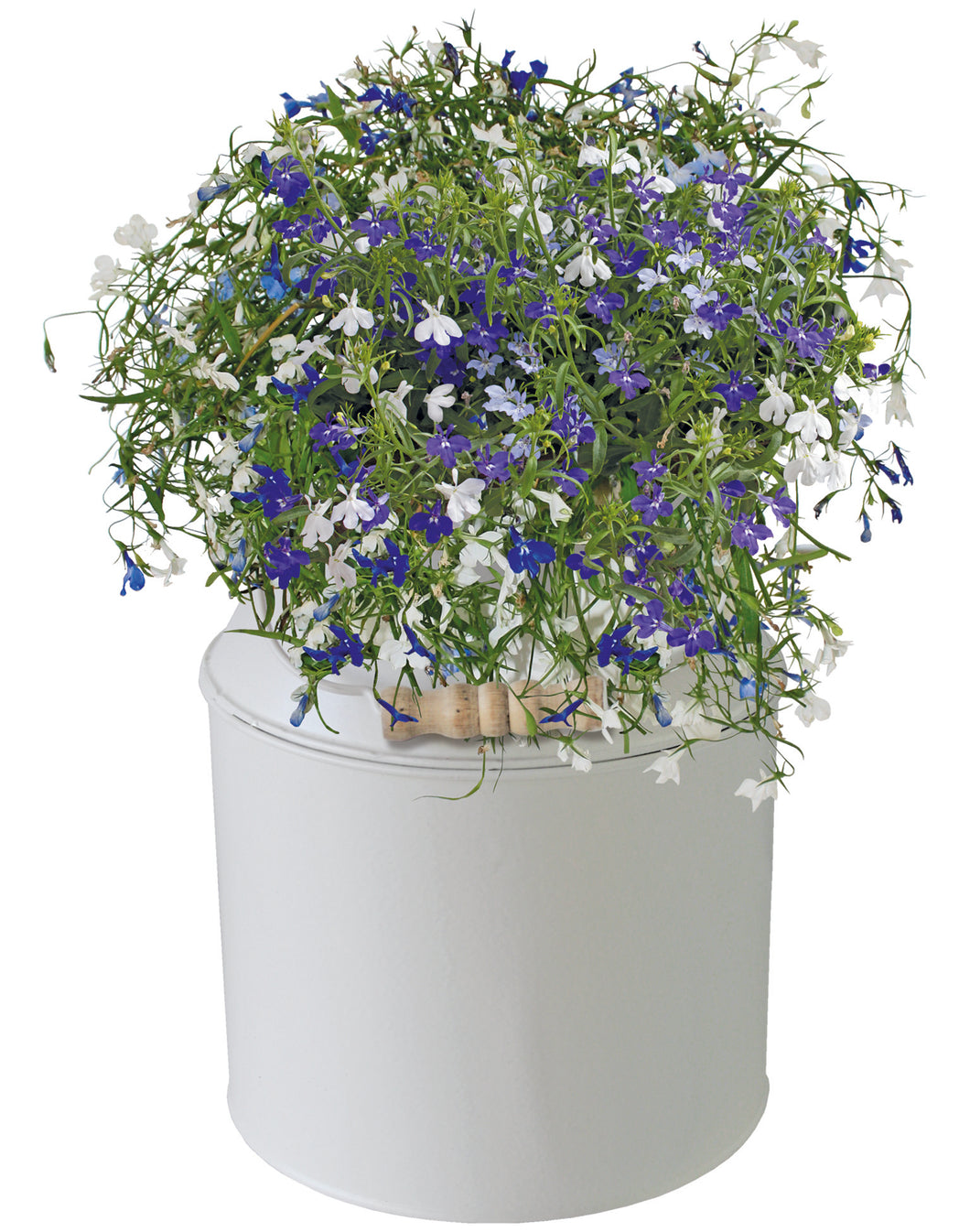 BEES® Lobelia Milk Churn Planter