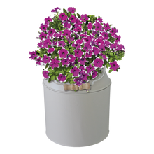 Load image into Gallery viewer, BEES® Petunia Milk Churn Planter