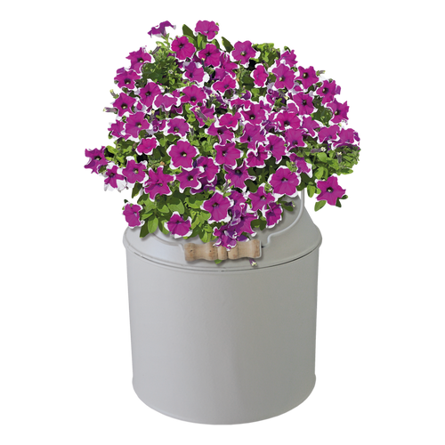 BEES® Petunia Milk Churn Planter