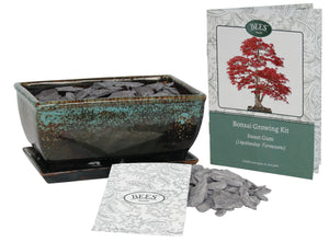 BEES® Premium Bonsai Tree Grow Set