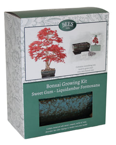 Premium Bonsai Tree Grow Set