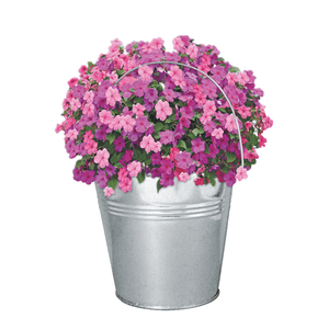 Busy Lizzie Beautifleur Pail Garden Planter