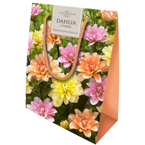 Grow Your Own Cut Flower Gift Bag Dahlia Perception