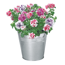 Load image into Gallery viewer, Petunia Beautifleur Pail Garden Planter
