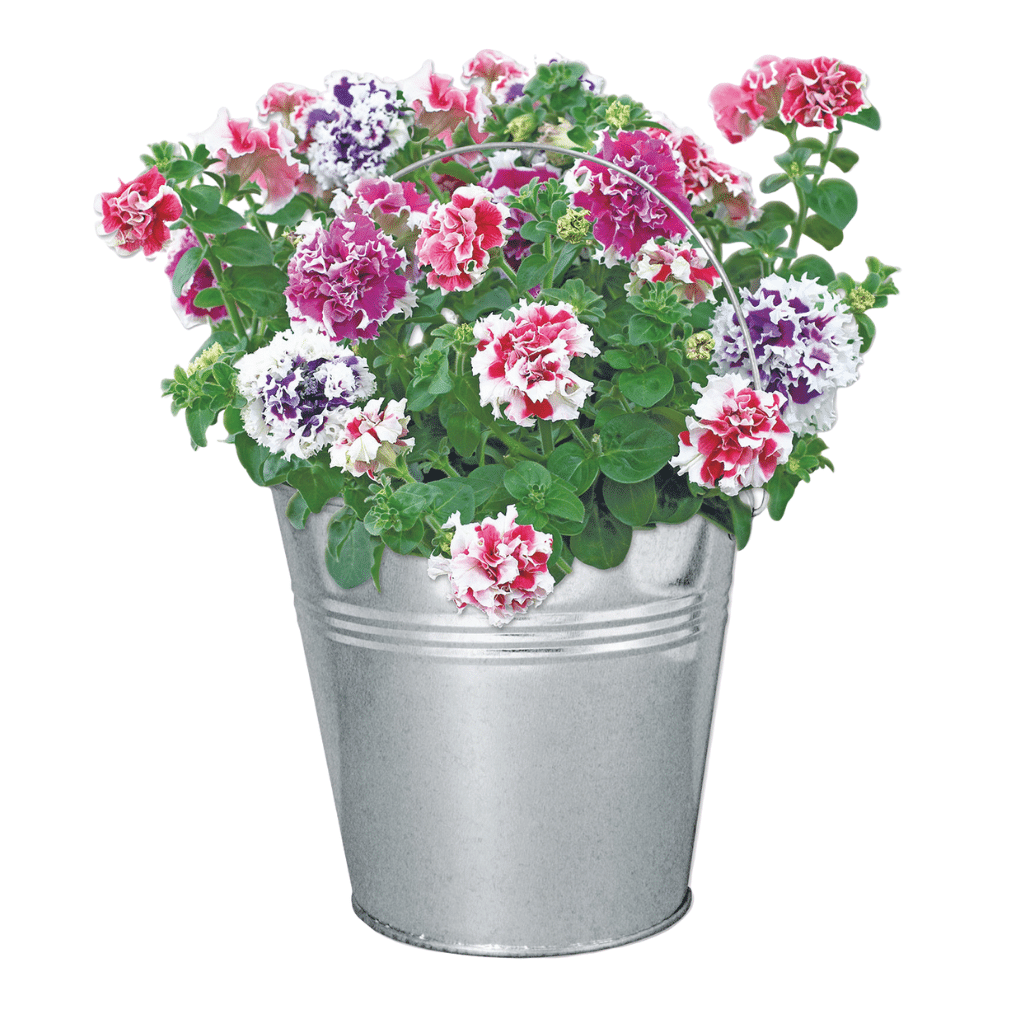 Petunia Beautifleur Pail Garden Planter