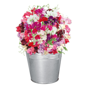 Sweet Pea Beautifleur Pail Garden Planter