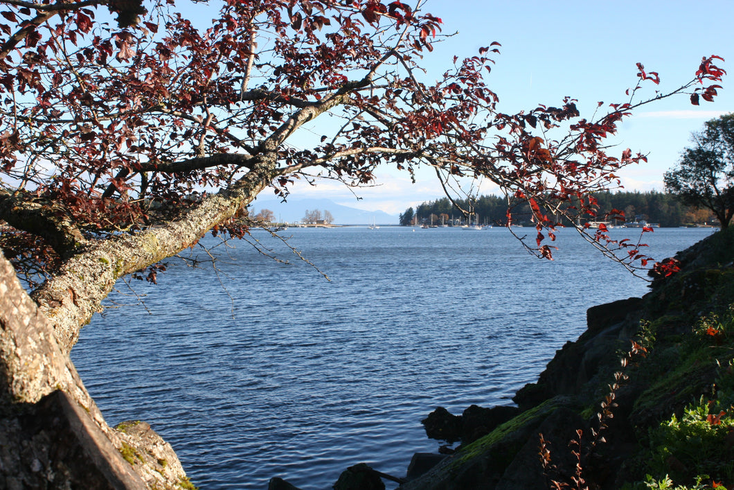 Nanaimo Waterfront