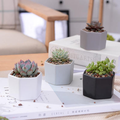 4pcs/set Matt Decorative Hexagon Flowerpot. - Paruse