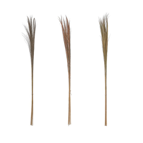 Feather Grass Bunch