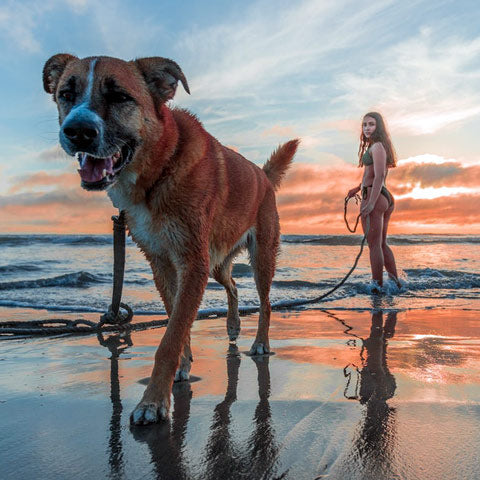 dog with woman on beach